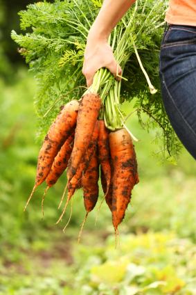 Bunching carrots